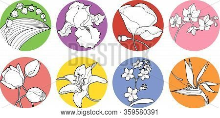 Set Of Vector Spring Blossom, Wildflower, Iris, Orchid, Forget-me-not, Strelitzia, May-lily, Lily, P