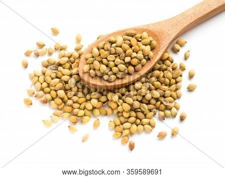 Spice Coriander (coriandrum Sativum) Seeds In Wooden Spoon Isolated On White Background. Indian Cuis