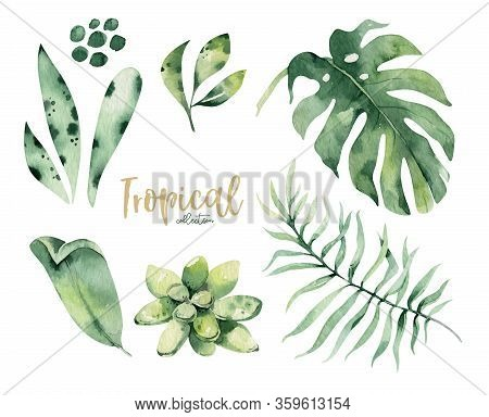 Hand Drawn Watercolor Tropical Flower And Leaves. Exotic Palm Leaves, Jungle Tree, Brazil Tropic Bot