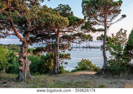 Scenic Landscape Of Black Sea Coast By Bolshoy Utrish Village, Anapa, Russia. Juniper Trees On Foreg