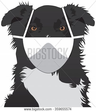 An Australian Shepherd Wearing A Face Mask Is Staring At The Viewer