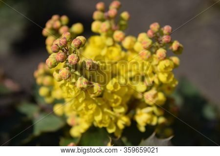 Yellow Spring Flower On A Green Grass