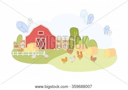 Free Range Chicken At Countryside Farm Vector Illustration. Hen Rooster Eat Grass On Meadow. Red Bar