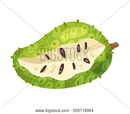 Guanabana Or Soursop Fruit Showing Creamy White Flesh And Black Seeds Vector Illustration