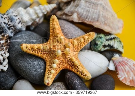 Nautical, Marrine Concept. Starfish With Shell Against A Yellow Background With Copy Space. Starfish