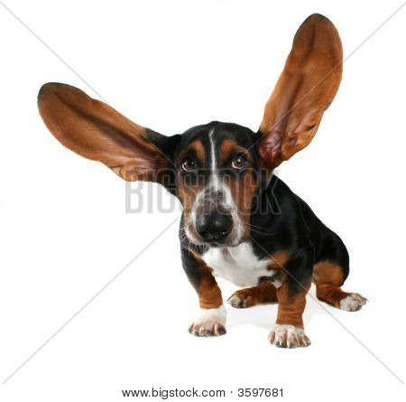 Flying Ears