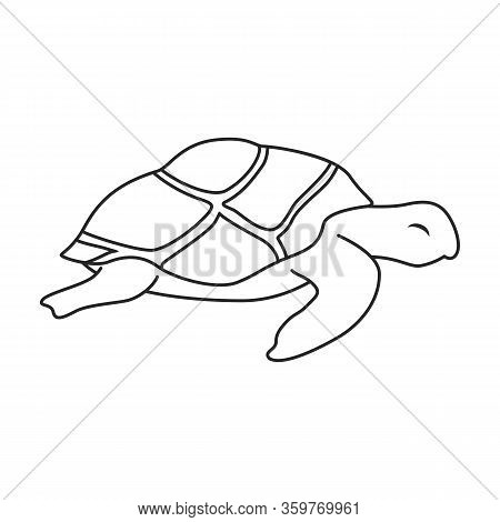 Sea Turtle Vector Icon.outline Vector Icon Isolated On White Background Sea Turtle.