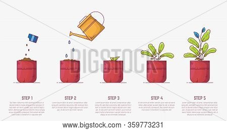 Growing Plant Stages. Seeds, Watering Can, Sprout And Grown Plant. House Plant In Flowerpot. Line St
