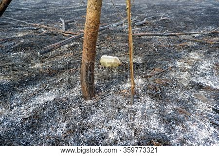 Flammable Liquid Bottle In The Zone Of Forest Wildfire On Burnt Grass Among Burnt Trees. Humans Faul