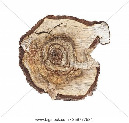 Cross Section Of Tree Trunk Isolated On White. Stump With Odd Shape