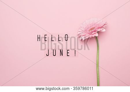 Hello June Text And Pink Gerbera Flower On Pink Background. Hello June Concept