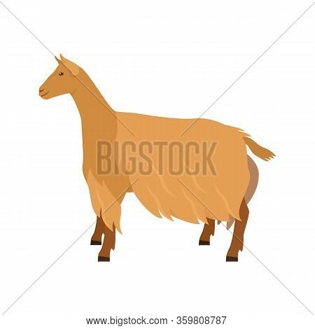 Golden Guernsey Goat Breeds Of Domestic Farm Animals Flat Vector Illustration Isolated Object On Whi