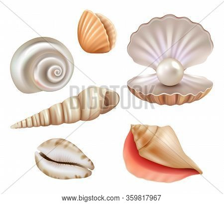 Open Seashells. Luxury Pearls And Marine Objects From Sea Or Ocean Vector Realistic Set. Mollusk And