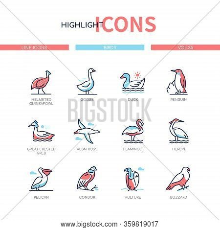 Bird Species - Modern Line Design Style Icons Set