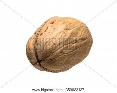Closed Ripe Walnut Isolated Object