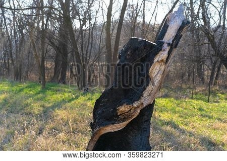 Burnt Felled Tree In The Ground.burnt Felled Tree In The Ground