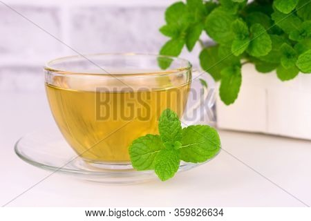 Mint Tea And Fresh Mint In The Background. Mint Tea On A White Background. Close-up.