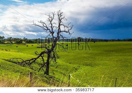 One dead tree in green grass field with rain cloud