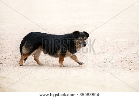 poster of homeless black and brown dog on yellow sand looking at camera