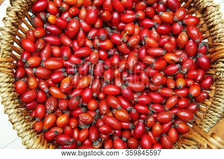 Red Rose Hips In Basket . Fresh Harvested Rose Hips In The Basket. A Basket Of Red Rose Hips . Fresh