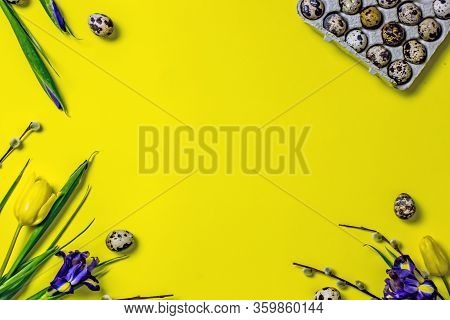 Easter Frame On A Yellow Background Twigs Of Yellow Tulips, Blue Irises, Pussy-willow Twigs, Quail E