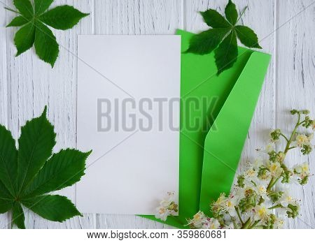 Spring Card With Chestnut Leaves And Chestnut Fruits. Blank For Spring Post Text. Mock Up With Chest