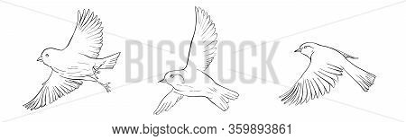 Vector Line Drawing Flying Birds, Sketch Of Sparrows, Hand Drawn Songbirds, Isolated Nature Design E