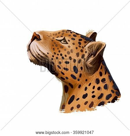 Leopard Watercolor Portrait Of Exotic Animal. Profile Of Panther Looking Aside. Felidae Family Membe