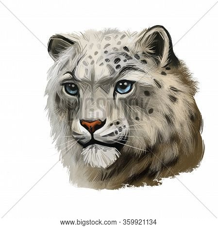 Snow Leopard Portrait In Close Up. Watercolor Digital Art Illustration Of Panthera Uncia. Mammal Wit