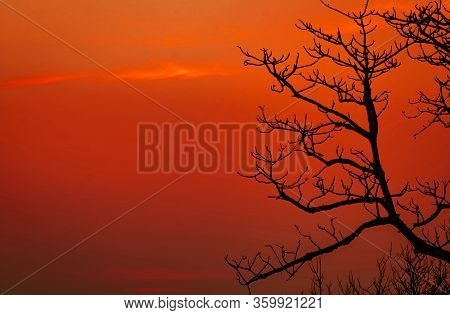 Silhouette Leafless Tree And Sunset Sky. Dead Tree On Red Sunset Sky Background. Romantic And Tranqu