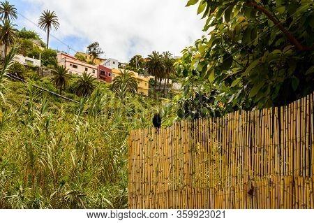 Chova Piquirroja, Grajo Or Catana Perched On A Fence In The Valley In La Hermigua On La Gomera. Apri