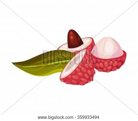 Litchi Fruit With Rough Opened Pink-red Rind And Sweet Flesh Inside Vector Illustration