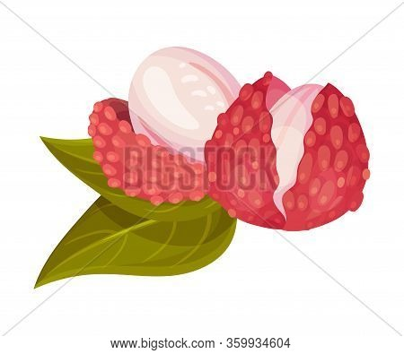 Sweet Flesh Of Litchi Fruit In Rough Red Rind Vector Illustration