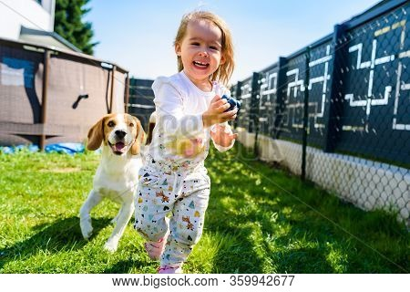 Child Playing With Beagle Dog Best Friend In Backyard On Sunny Spring Day. Happy 2 Years Old Girl Ru