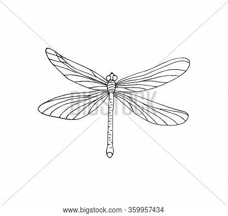 Vector Hand Drawn Doodle Sketch Dragonfly Isolated On White Background