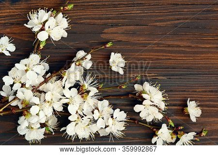 Twigs Of Blooming Cherry On A Brown Wooden Background. Place For Text, Copy Space. Spring Blooming B