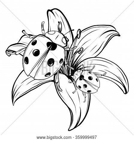 Ladybird Illustration. Set Of Three Ladybirds Isolated On Chamomile And Leaves.
