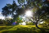 Green trees in park and sunlight with nice house for adv or others purpose use poster