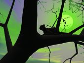 Silhouette view of panther sitting on the branch of a tree by green night with full moon poster