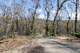 Trees Regenerating In The Blue Mountains In Australia After The Severe Bush Fires