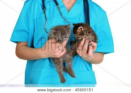Veterinarian examining kittens isolated on white poster