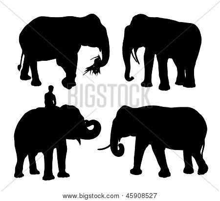 four realistic silhouettes of an asian elephant walking eating standing with the rider poster