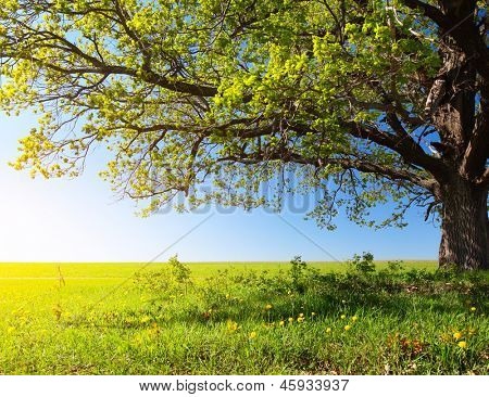 Spring tree with fresh green leaves on a blooming meadow