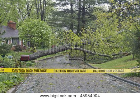 poster of Storm broken oak tree fallen down across a wet neighborhood road with yellow police tape in the foreground warning of high voltage wires down