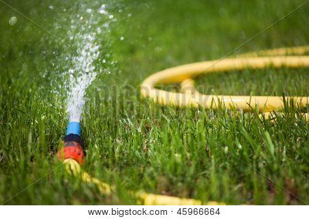 Garden water hose on a well groomed freshly cut grass