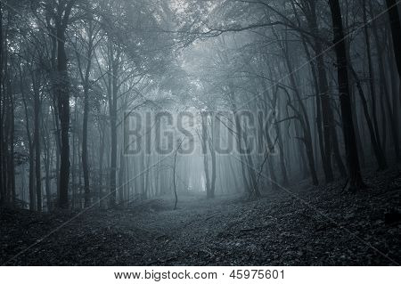 Deep dark forest with thick forest in late autumn