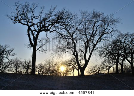 Sunset Between Two Trees