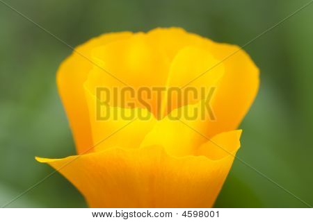 Yellow Petals In Close Up Shot