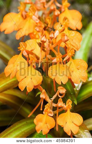 Yellow Snap Dragon Flower