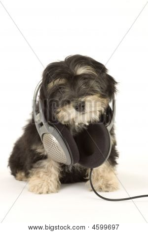 poster of lying puppy listening to music with headphones isolated